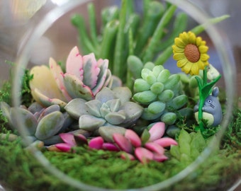 Succulent Terrarium Centerpiece - Totoro REAL LIVE PLANTS