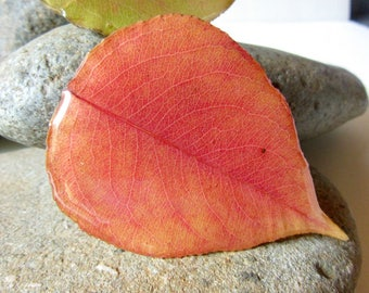 Real Fall Leaves Refrigerator Magnets, Set of Three Leaf Magnets, Resin Leaf Magnets