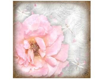 Greetings Card Pink Rose