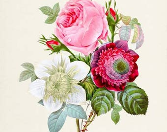 Rose Anemone Clematis Flower Art Print, Botanical Art Print, Flower Wall Art, Flower Print, Home Decor, red, green, white, pink
