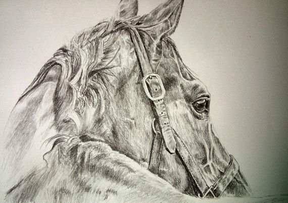 Original pencil graphite horse on water color paper