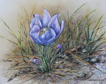 Crocus Facing Upward ORIGINAL watercolor painting 8x10 wildflowers purple flowers spring nature by Christy Sheeler