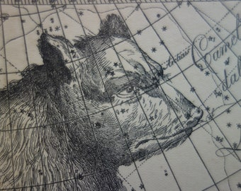 Old star chart Dutch vintage astronomy map of Great Bear Big Dipper Ursa major Leo zodiac sign hemisphere constellation stars astrology