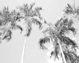 Black and White Nature Collection - Darwin Palms
