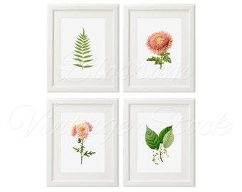 Antique Botanical Art Print Set Pink Flowers Prints INSTANT DOWNLOAD Digital Images Vintage Illustrations for Print 5x7, 8x10, 11x14 - 2136