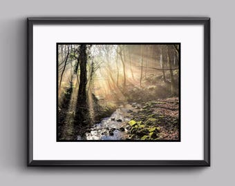 Forest Stream Photo - Print - Landscape - Scenic - Nature - Forest - Gift