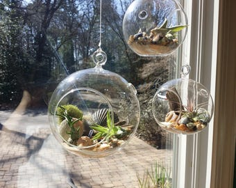 Air Plant Hanging Globe Terrarium Set of 3 | Tillandsia | Beach Decor | Air Plant Container | Airplant Gift | Airplant Kit