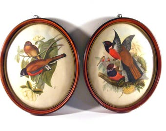 Set of Two Vintage Signed John W Gould Bird Prints in Oval Frames