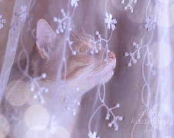 Winter Cat behind lace Curtain Instant Digital Download Art Photography Printable, lilac animal photography, home decor for cats lovers