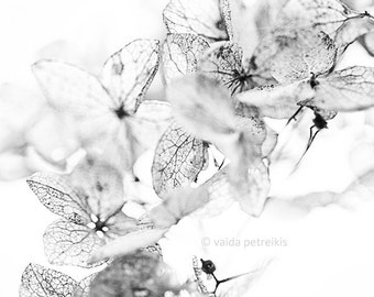 White neutral print from the Nature Graphics series - Eco graphical home decor photo 6x6 inches