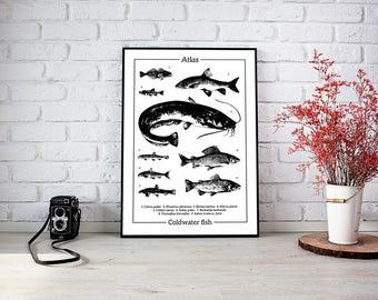 Fish Atlas. Original illustration art poster. Print signed by Marek Sienkiewicz.