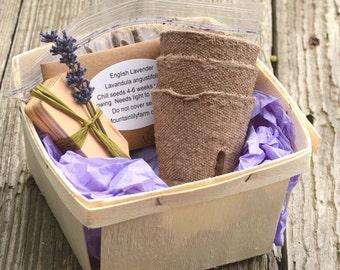 Lavender Plant Kit, English Lavender Garden Set, Lavender Herb Garden, Gift for Her, Hostess Gift, Gardening Gift Set, Gift for Mom