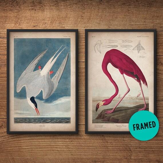 Aves Audubon sistema de impresión enmarcada Flamingo