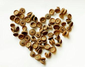 100 Natural Acorn Caps, Real Acorn Tops, Floral preform for crafts, Natural Home decor , Florist crafts.