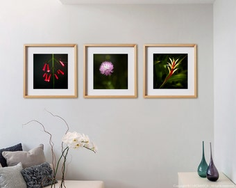 Flowers 3C Print Collection.  Nature photography, botanical, red, pink, wall art, artwork, large format photo.