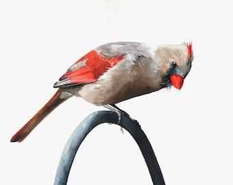 Cardinal Painting - C003 bird art - Print of watercolor painting - 5 by 7 print wall art print - bird art print - watercolor print