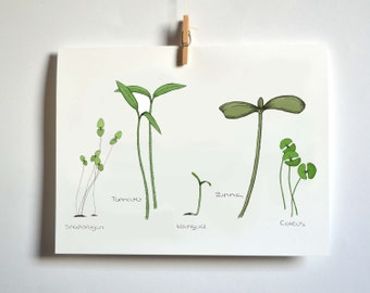 Seedling Variety Greeting Card