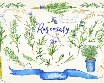 Rosemary. Watercolor clip art, hand drawn. Romantic wedding, blue, violet purple flowers tender, wedding invitations