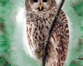 Owl (a8), Original painting