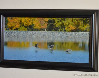 Framed Flying Geese Photo