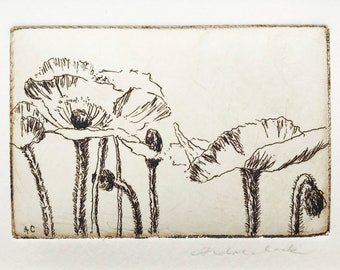 original etching of poppies