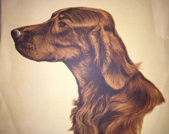 "Irish Setter Print by Gladys Emerson Cook Vintage Dog Print 16"" by 12"" Circa 1950s-60s"