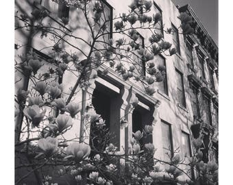 Spring, Bloom, Black & White, Brooklyn, Photography, Print, Wall Art, Flowers, peaceful