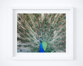 Peacock photo print - Wife gift - Modern photography wall decor - Bird art - Large art -  Exotic wall art - Mothers Day gift  Colorful green