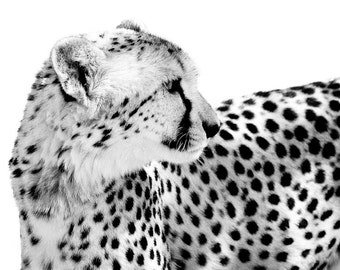 Wildlife Photography - Cheetah Art - Black and White Art - Cheetah Photo - Monochrome Fine Art Animal Art Photography Wall Art