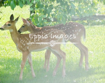 Twin Fawns in the Shade Digital Download
