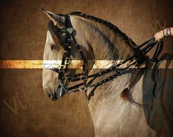 Dressage horse  art photography for prints