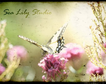 Madame Butterfly : nature photography surreal pink flower spring summer bokeh sage green pastel love kiss 8x12 12x18 16x24 20x30 24x36