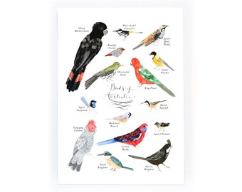 Some Birds of Australia - archival art print