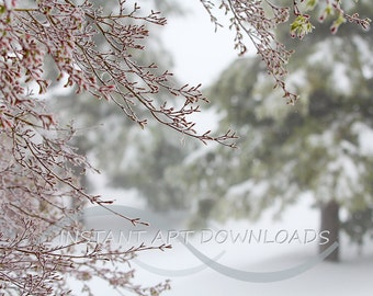 A real winter snow scene for a studio backdrop  Background prop. Digital download. Instant fine art Stock photos, Extra large, Country scene