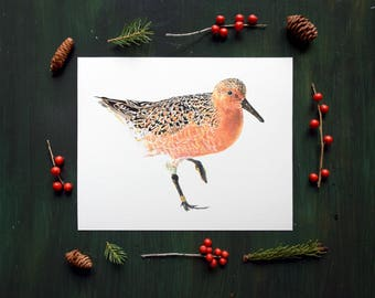 Redknot Rufa Shorebird Fine Art Watercolor Print