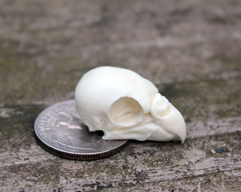 parakeet bird skull replica
