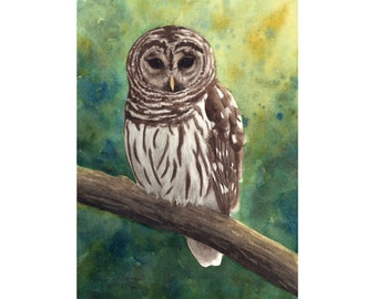 Barred Owl Watercolor Print from an Original Painting by Laura D. Poss - Three sizes available- Bird Art, Owl Art Gift, Giclee Reproduction