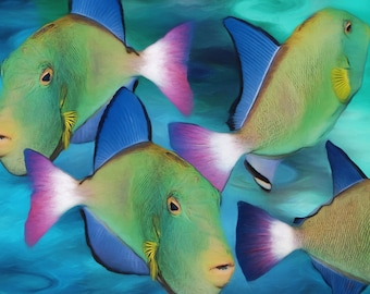 Tropical Art, Colorful Fish, Fish Painting, Coastal Art, Beach Decor, Pink Tail Triggerfish, Fine Art Print, matted or unmatted, Bath Art