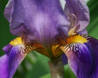 Arwen's Robes - Iris Photo Notecard, Photo Greeting Card, Blank Greeting Card, Floral Photo Notecard, Stationery, Blank Notecard, Note Card