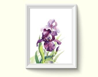 Iris Flower Watercolour Painting Drawing Art Print N471