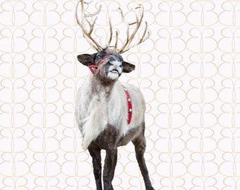 Santa's Favorite Reindeer Overlay + Bonus Christmas Tree Farm Background!