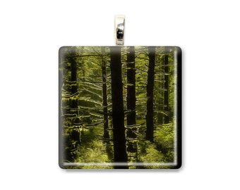 Mossy Forest - Glass Tile Photo Pendant - Original Photography