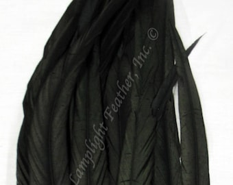 Coque Rooster Tail Feathers 15-18 inch long (SELECT COLOR) per 12 feathers for costumes, headresses, dance