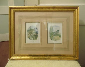 Frame and Matted Pair of Bird 2/3 Scale Prints/ Tree Sparrow and Black Redstart