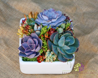 Mother's Day Succulent arrangement/centerpiece in white square container/bowl-Large