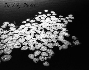 Dark Lily : black white photography monochrome lake murky water ripple surreal dream haunting home decor 8x10 11x14 16x20 20x24 24x30