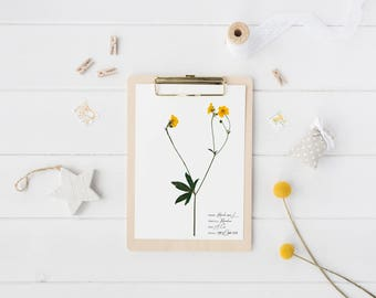 Ranunculus botanical print - Yellow flower print - Botanical art - Vintage home decor - Nature print