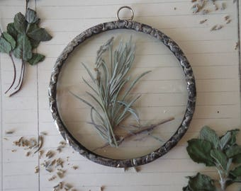 Botanical framework-medicinal plants-Herbarium-real picture dried lavender-herbal subglass-mother's Day-new house gift