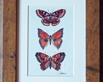 Butterfly Art Print  Butterfly Picture  Butterfly Painting  Butterfly Wall Art from the original painting. Beautiful Oak effect frame