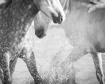 Horse photography, black and white horse, fine art horse photography, horses playing in water, wall art